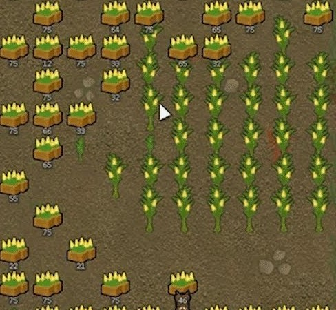 corn rimworld crop
