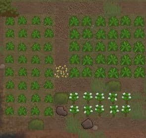 potato best crops rimworld