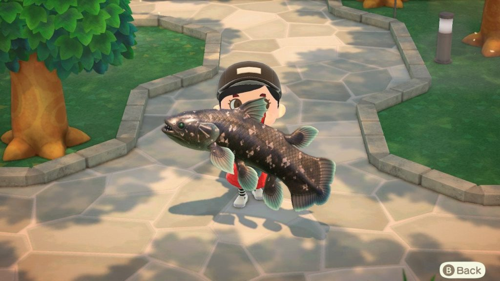 how to catch the coelacanth new horizons